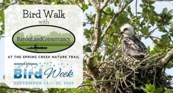 Bird Walk | Citizens Environmental Coalition