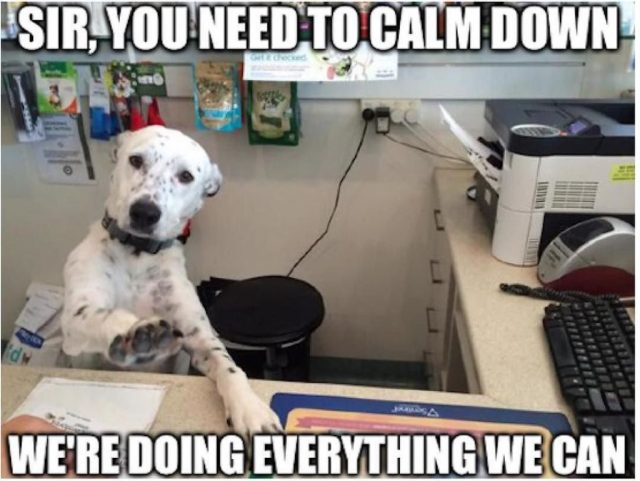 Dog Telling You To Calm Down