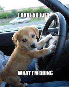 Dog driving car meme
