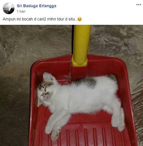 grup Perserikatan Kocheng Bar Bar Facebook