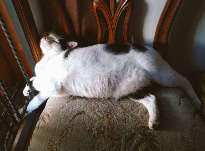 Pose tidur kucing Berbagai sumber