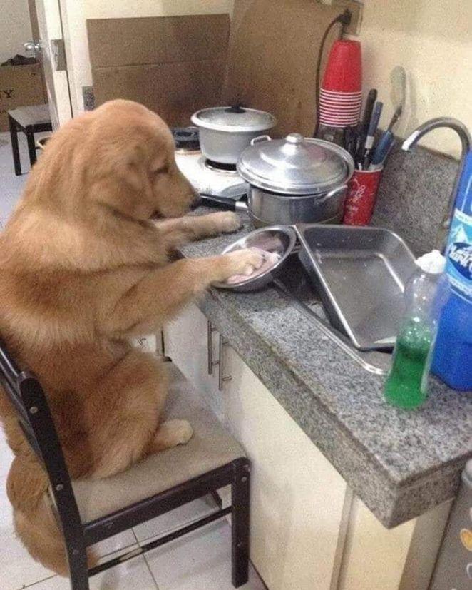 momen lucu cuci piring © Berbagai Sumber