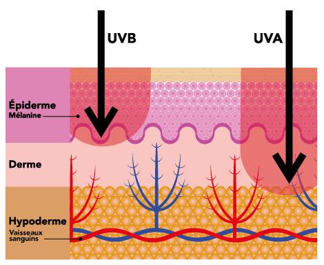 penetration des rayons uva dans la peau