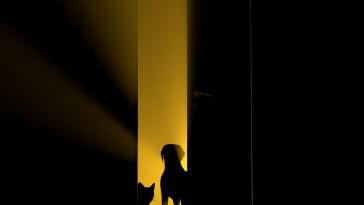 Cynophobie : tout savoir sur la peur des chiens