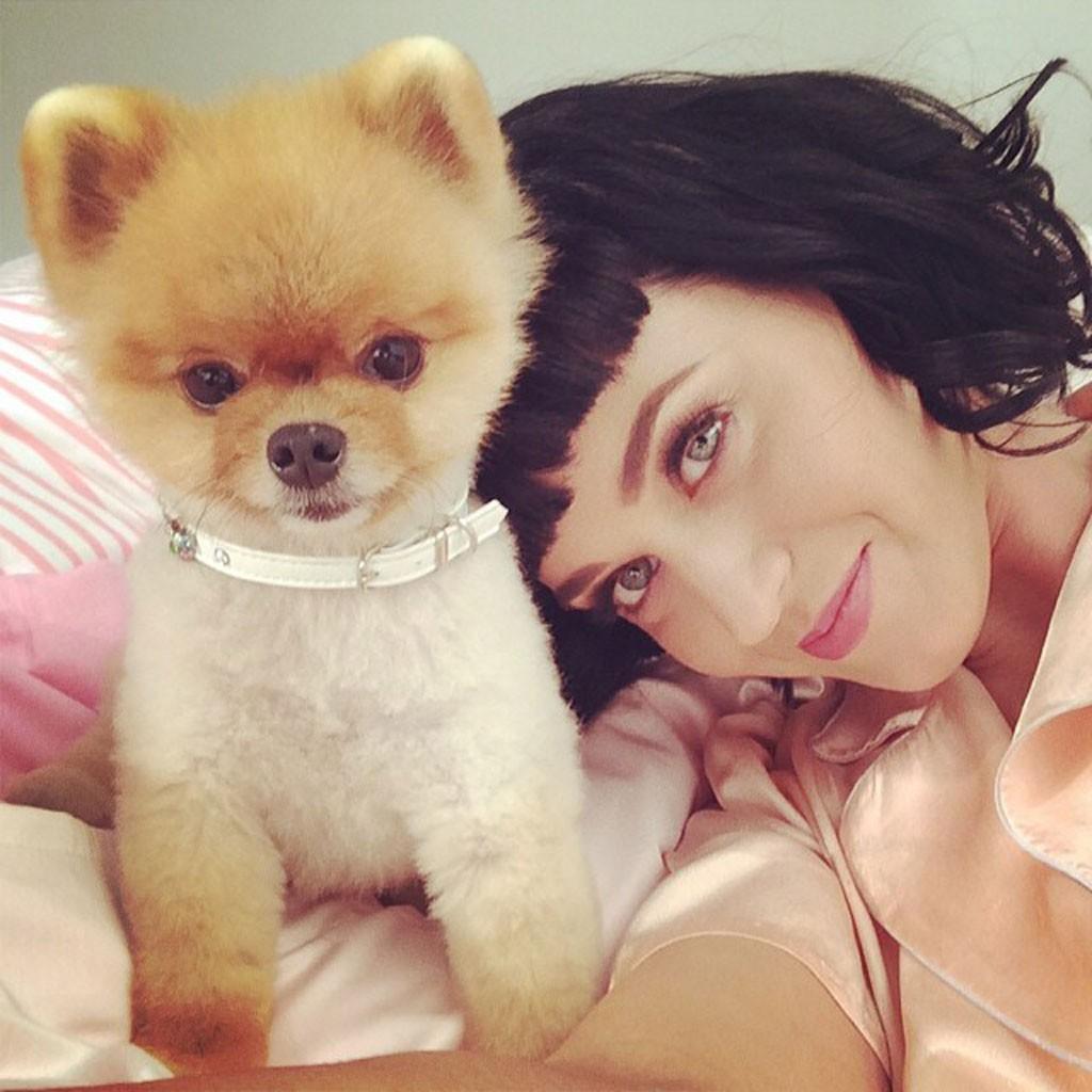 Katy Perry Dogfie Catfie Le Selfie Animal La Nouvelle