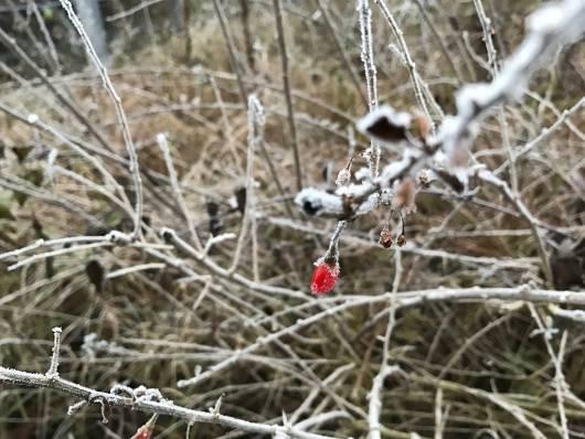 Frozen berry.