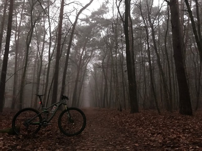 Bike in the woods.