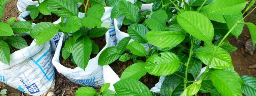Eco-Friendly Costa Rica Image: With their green little leaves, plants sit in bags waiting to be placed into the Earth so that they can continue to grow.