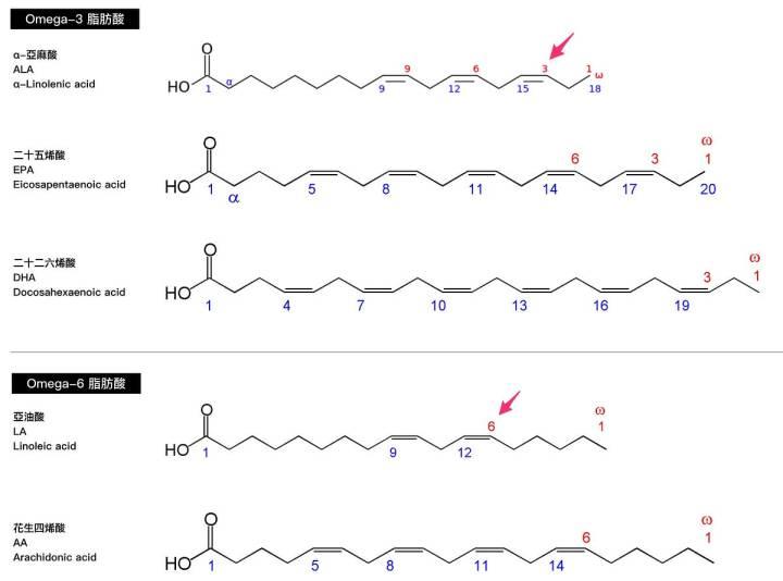 omega3-脂肪酸-結構