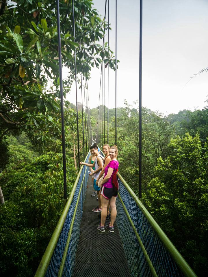 Singapore The MacRitchie Reserve And The Treetop Walk