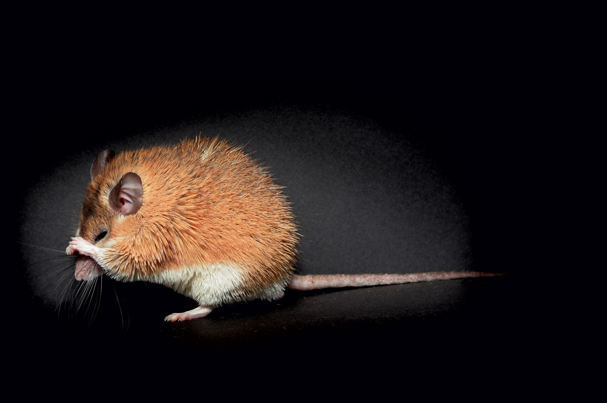 5 Adorable Nocturnal Mammals You Ve Never Heard Of