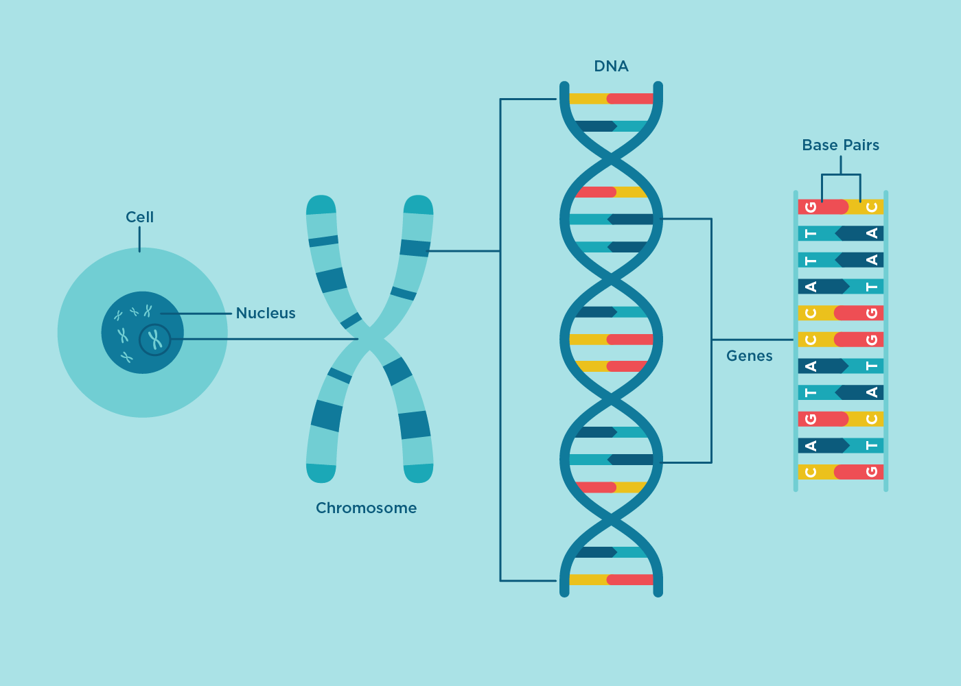 Happy National Dna Day Color Genomics