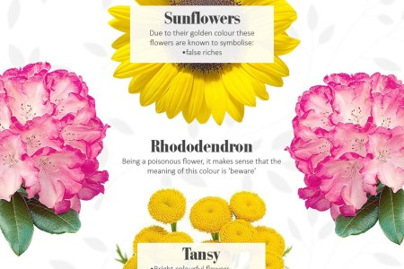 Different Flowers And Their Meanings Best Wild Flowers Wild Flowers