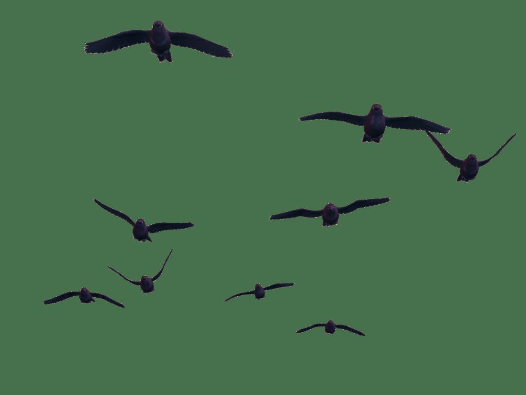 What Type Of Bird Are You Bullshitt
