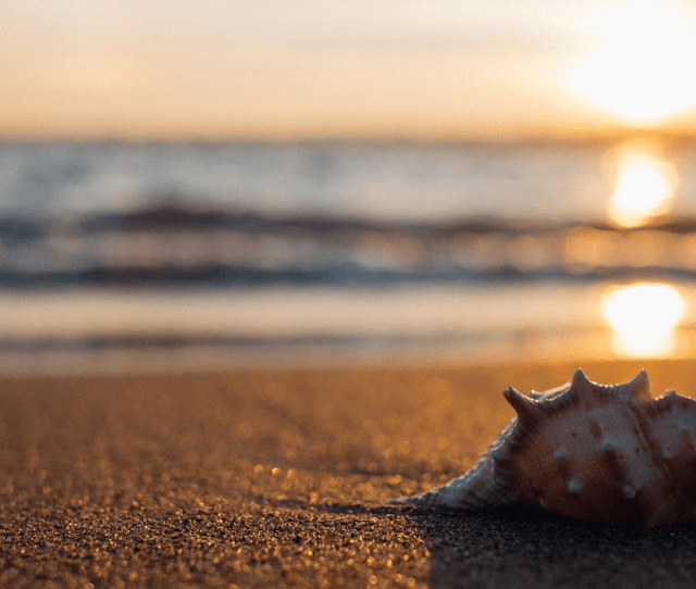 The Story Of A Shell