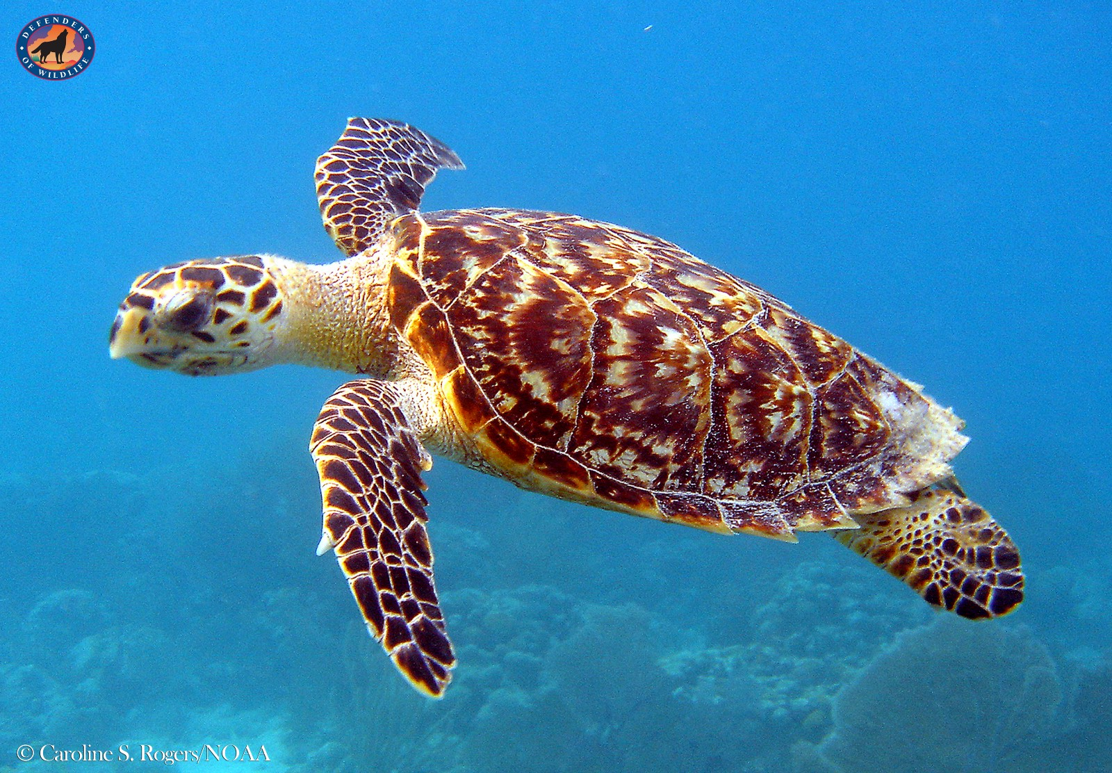 Coming Together To Protect Sea Turtles Wild Without End