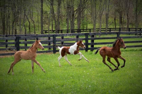 Nurse Foals The Throwaway Horses Ryan T Bell Medium