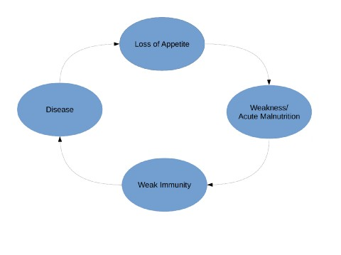 cycle of disease and malnutrition