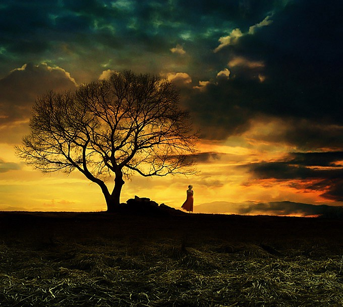 A tree on a lonely heath