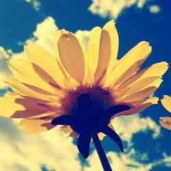 Spring Flower Living