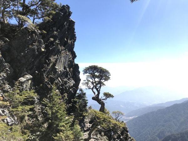 武陵四秀池有名樹