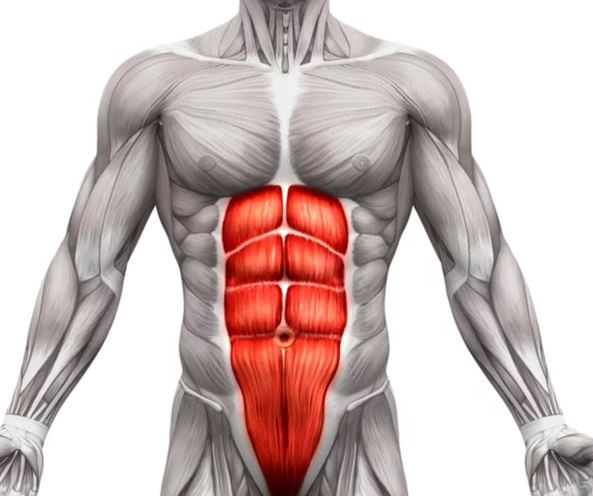The Best Six Pack Abs Guide (Science-Based) – Brad Newton Fitness Blog