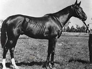 The Breeding Behind Domino Bloodhorse