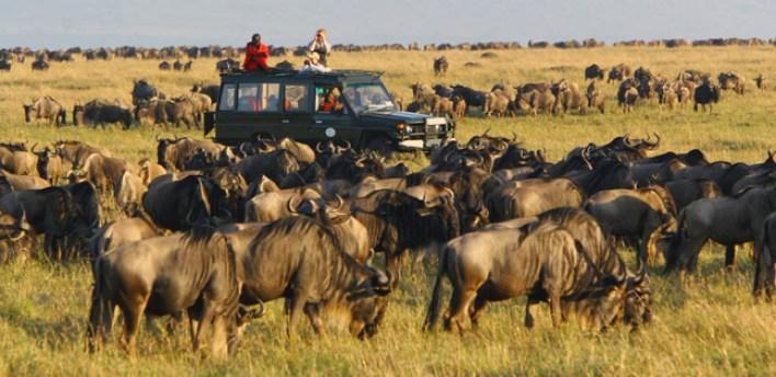 Image result for wildebeest migration masai mara