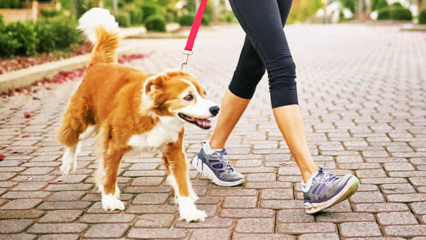 Image result for Is your dog in need of a dog walker?