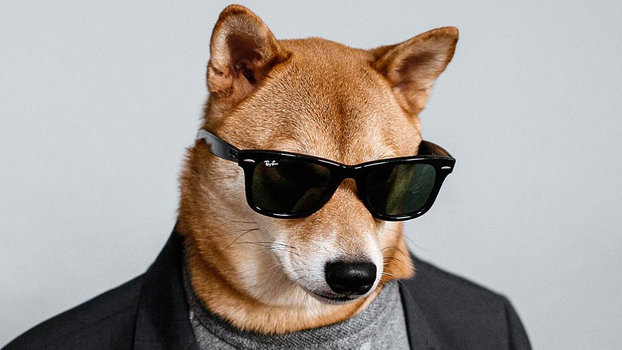Interview With An Instapet Menswear Dog