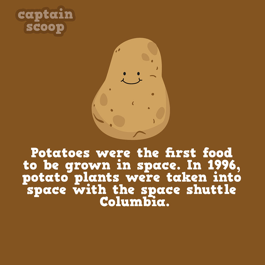 interesting-facts-about-vegetables-81__880