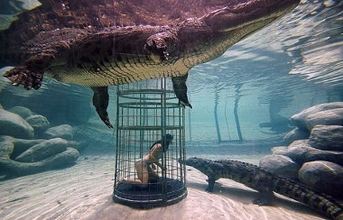 Crocodile-cage-diving2_1822
