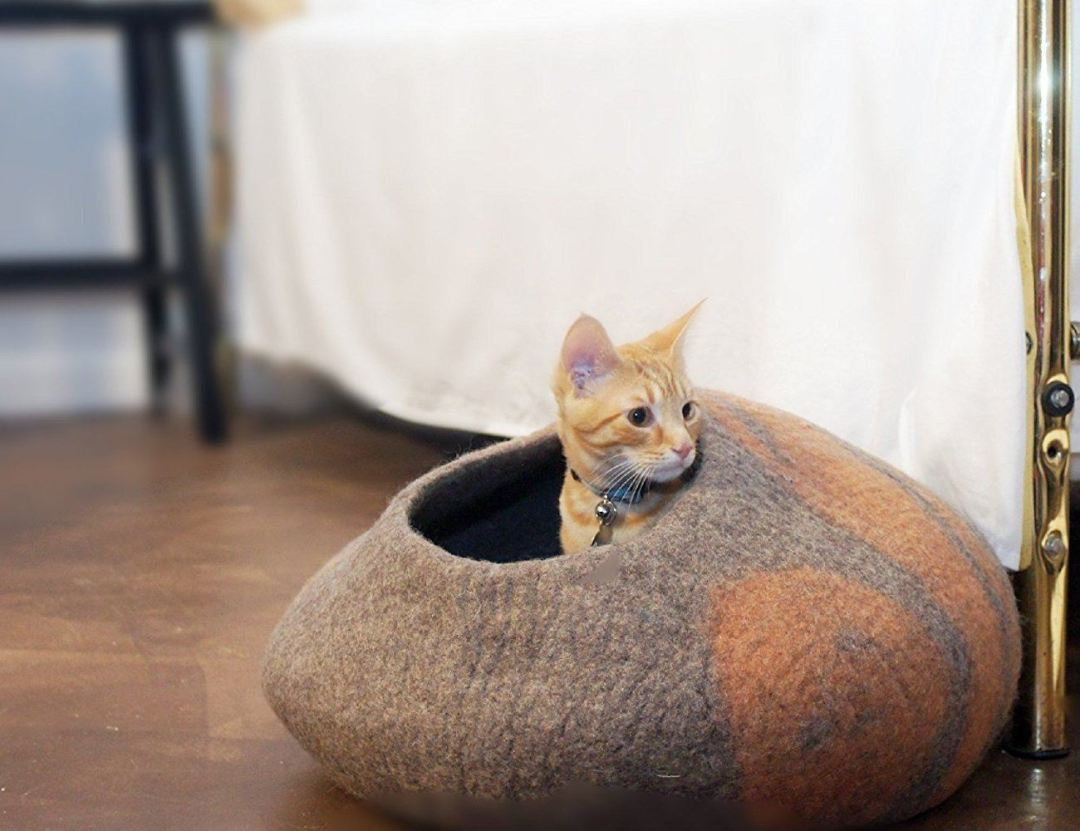 10 Pet Accessories to Make Your Cat Happy and Love You More