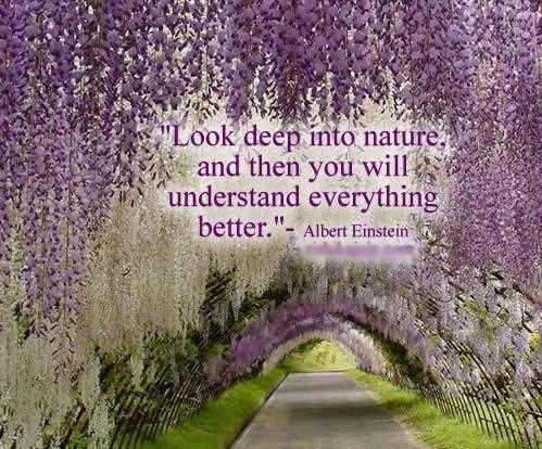 Look-Deep-Into-Nature-Inspirational-Life-Quotes
