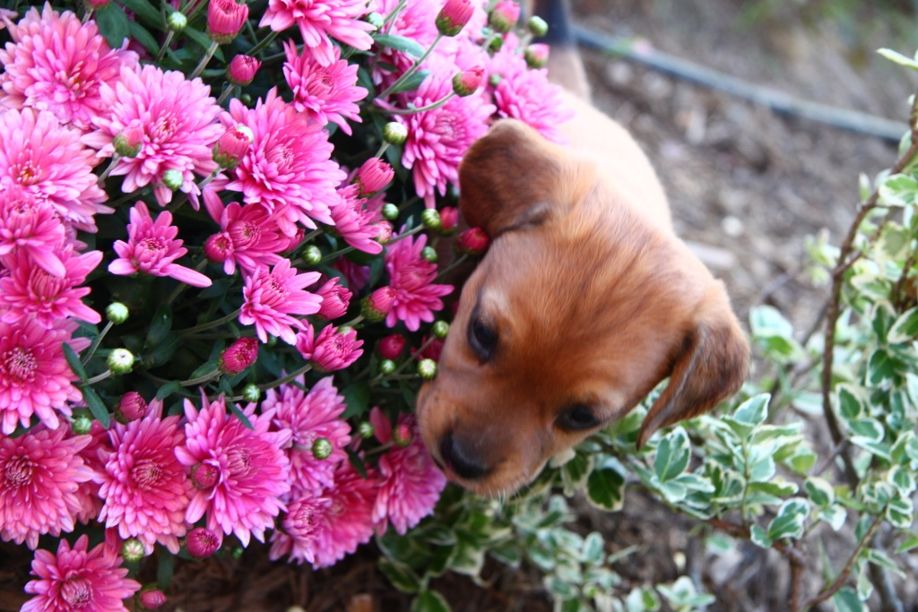 Plants that are harmful for your pets