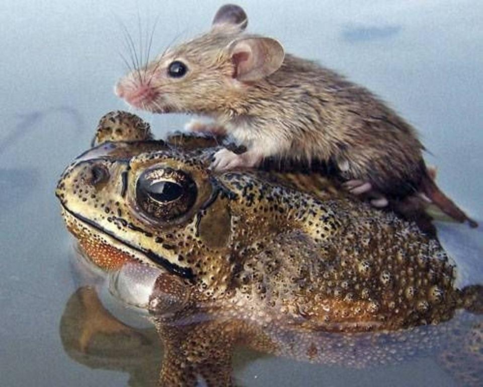 Froggy Friend