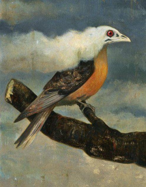 extinctiongerarddubois