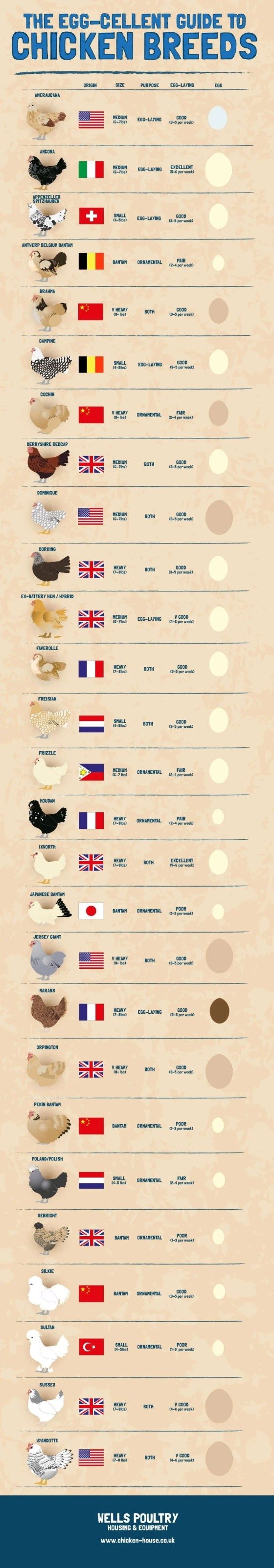 the-eggcellent-guide-to-chicken-breeds_518a5ab62bebb