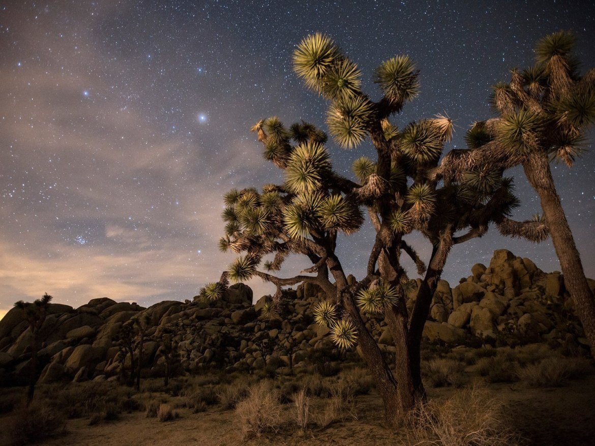 joshua-tree-national-park-GettyImages-557125411