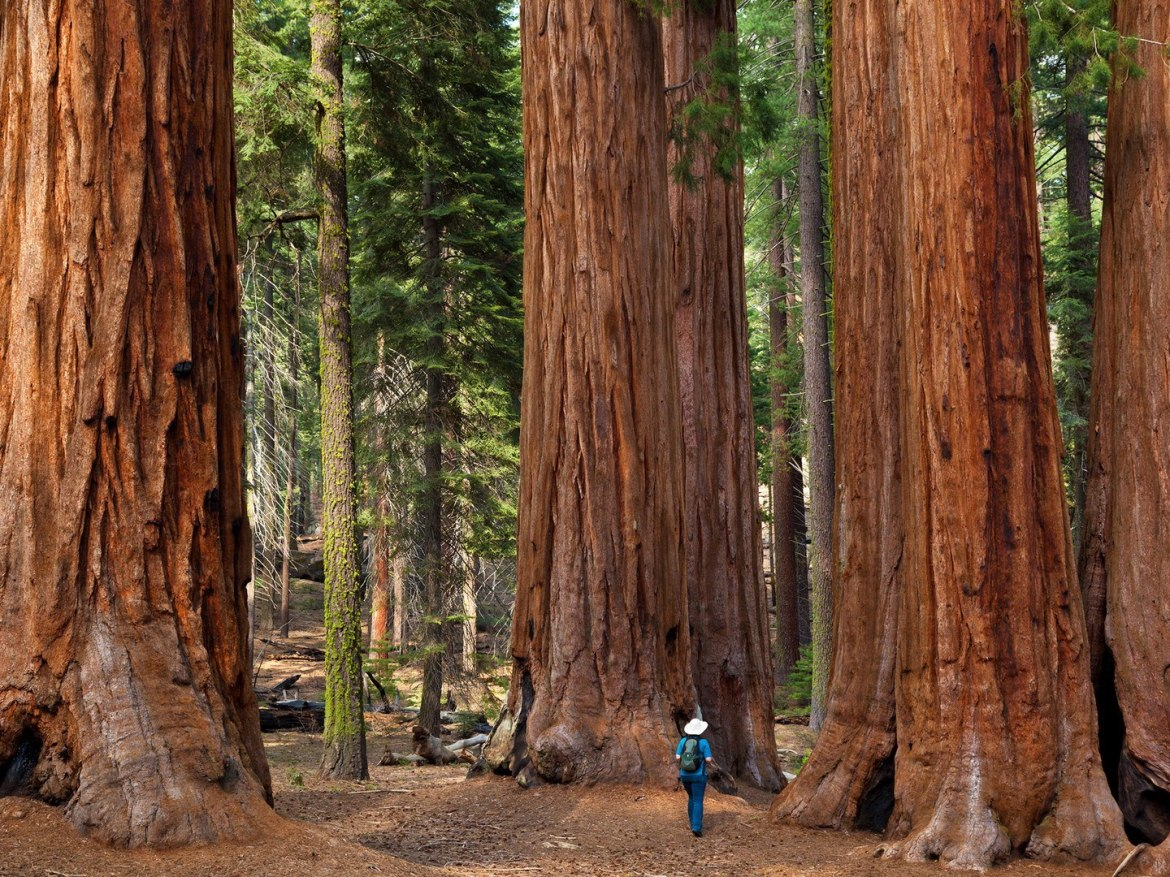 sequoia-national-park-GettyImages-131984901