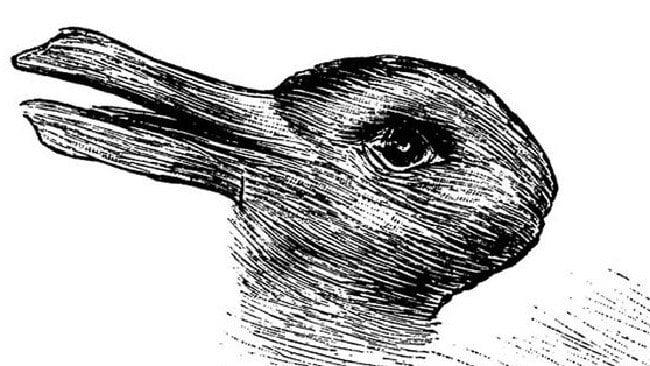 duck or rabbit