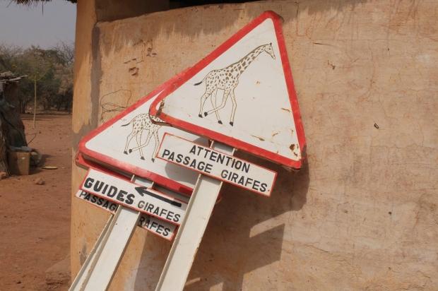 Attention girafes