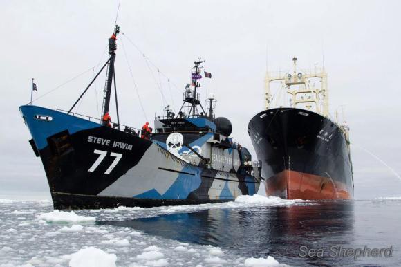caça-as-baleias-sea-shepherd-paul-watson-japão-temporada-tolerância-zero