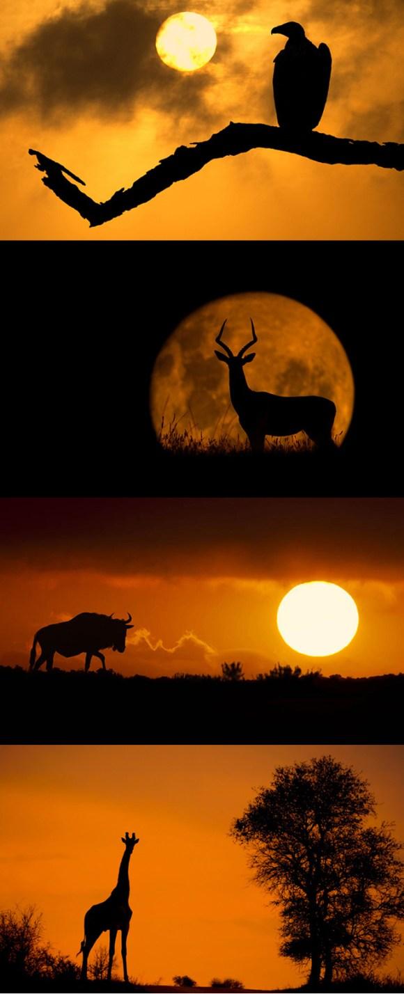 fotografo-capta-silhueta-de-animais-na-africa-do-sul