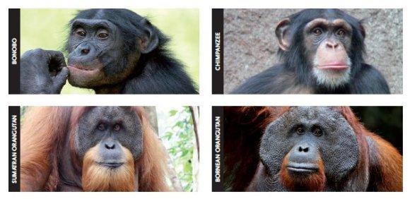 grandes-primatas-declinio-alarmante-da-especie