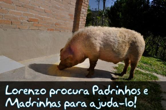 lorenzo-varaha-porquinho-coletivo-camaleao-veganismo-resgate