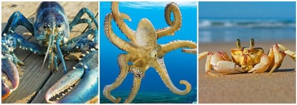 estudo-comprova-que-polvo-lula-lagosta-camarão-são-animais-sencientes-sentem-dor