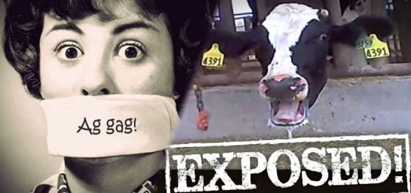 casos-repressão-movimentos-sociais-direitos-animais-ag-gag-censura-matadouros-industria-exploração-animal-especismo