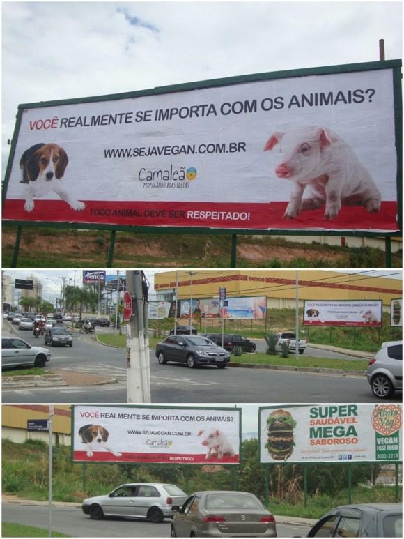 camaleao-coloca-o-primeiro-outdoor-sobre-direitos-animais-no-vale-do-paraíba-taubaté-veganismo-outdoor-vegano-outdoor-vegetariano