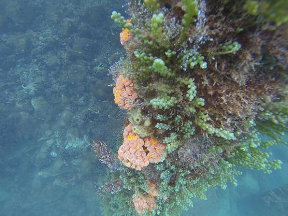 turismo-irresponsavel-ameaca-biodiversidade-em-recifes-corais